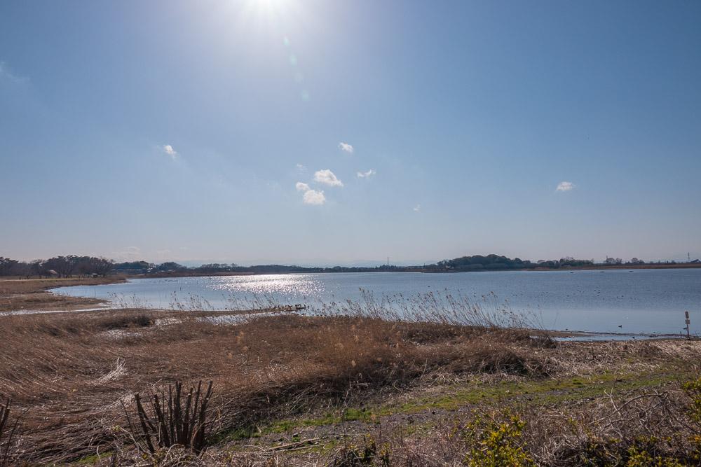 rx10m4で撮影した多々良沼