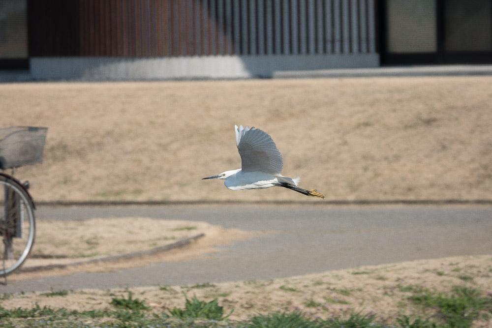 rx10m4 野鳥 サギ 流し撮り