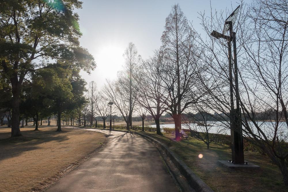 rx10m4 館林市つつじが岡公園 逆光