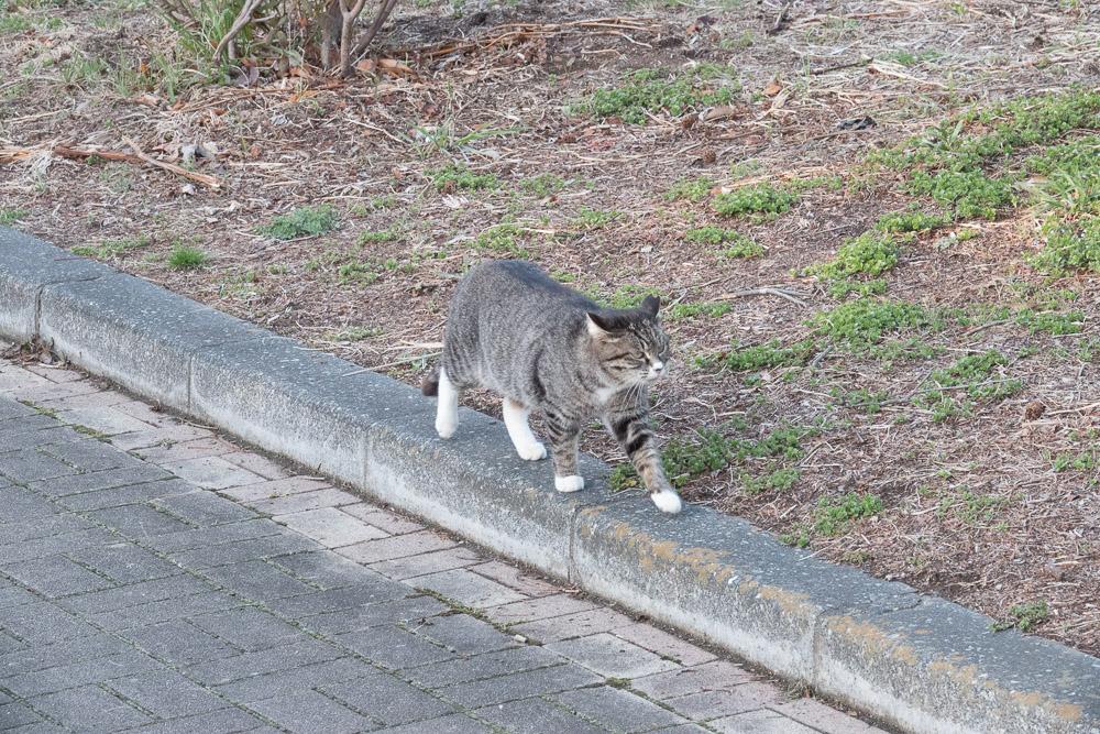 rx10m4 館林市つつじが岡公園 動物 猫