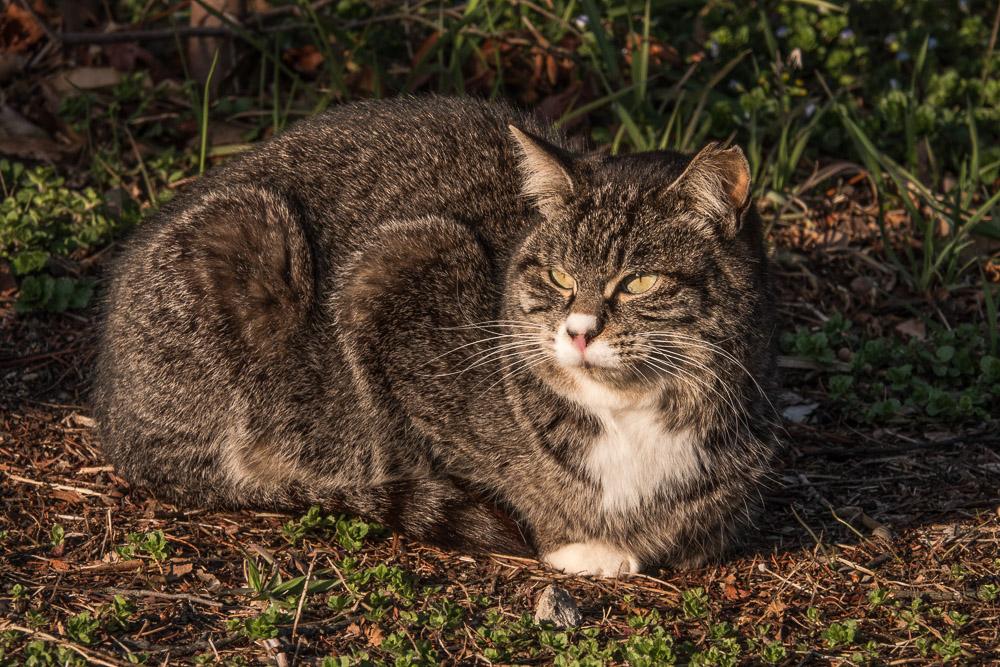 rx10m4 館林市つつじが岡公園 動物 猫3