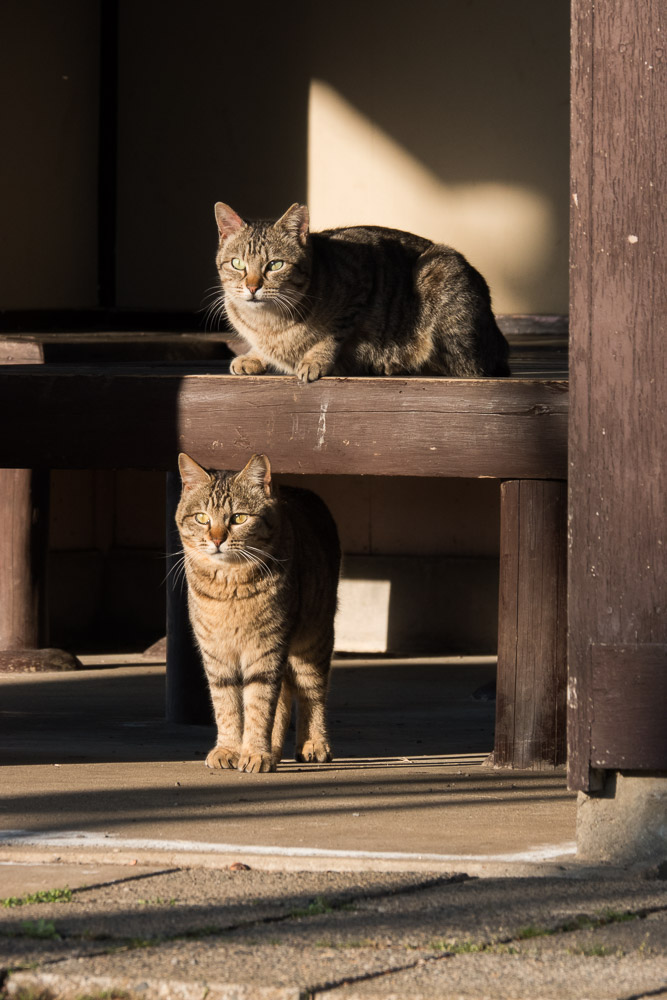 rx10m4 館林市つつじが岡公園 動物 猫4