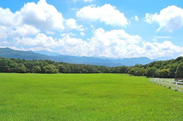ヒルナンデスで紹介された「初夏の八ヶ岳山麓ツアー」(山梨・清里高原)のまとめ