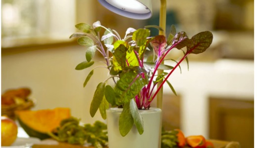 まちかど情報室 水耕栽培ができるLEDライト